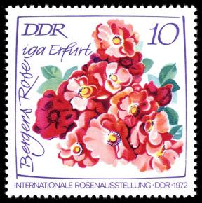 DDR Briefmarke Bergers Rose Foto Wikipedia